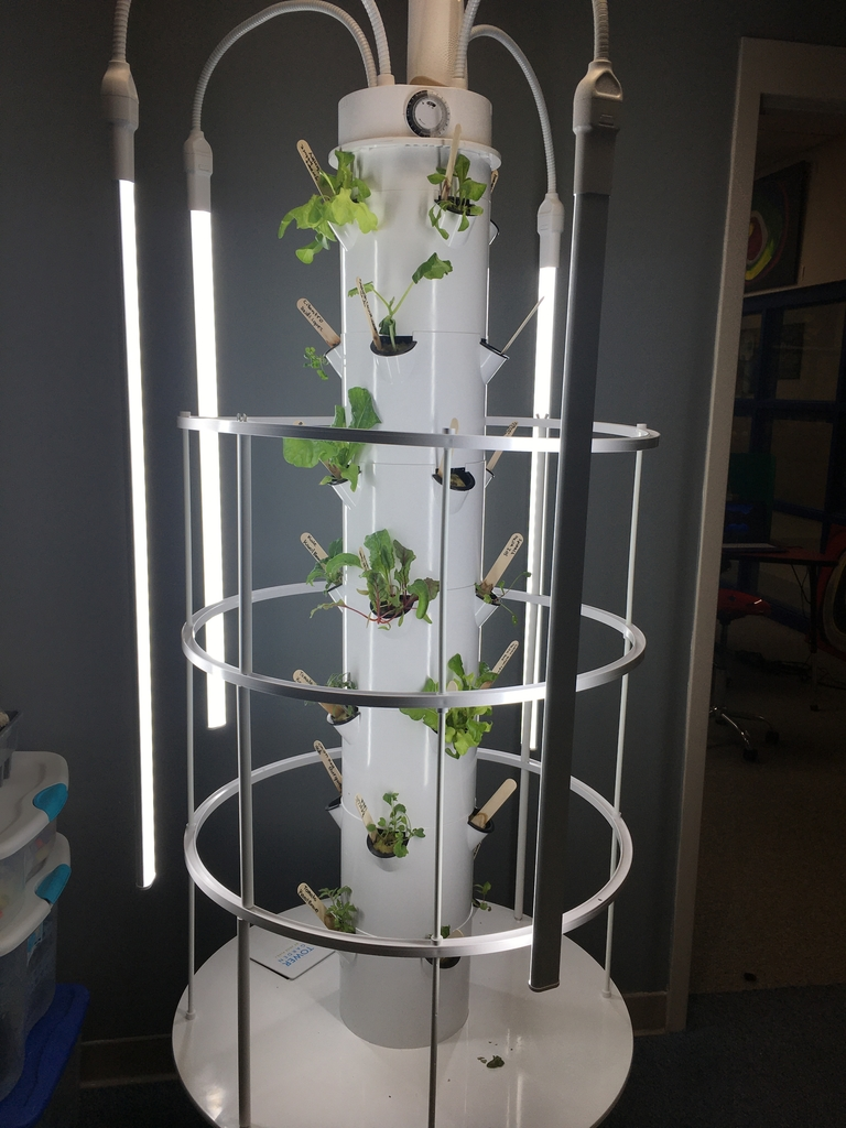 Hydroponics garden is showing off!  New growth every day!  Fresh salad, anyone? 👏👏👏