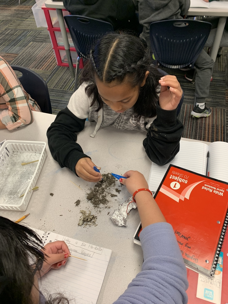 Owl pellet dissections